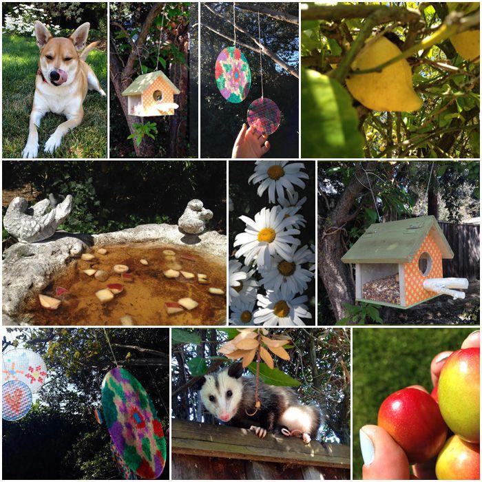 ליפה תופסת צל, בית ציפורים שהכנו, לוכדי שמש, פירות גינתנו, נקטר לפרפרים ואמא אופוסום שבאה לבקר.